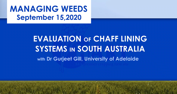 VIDEO:EVALUATION OF CHAFF LINING SYSTEMS IN SOUTH AUSTRALIA with Dr Gurjeet Gill; University of Adelaide