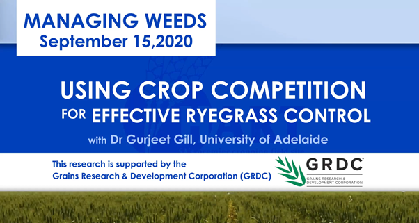 VIDEO: USING CROP COMPETITION FOR EFFECTIVE RYEGRASS CONTROL with Dr Gurjeet Gill; University of Adelaide