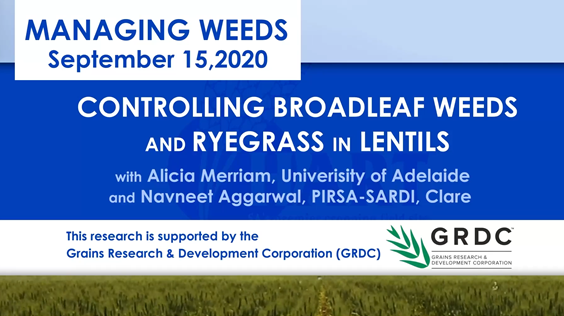 VIDEO:Controlling broadleaf weeds in ryegrass and lentils with Alicia Merriam, University of Adelaide & Navneet Aggarwal, PIRSA-SARDI