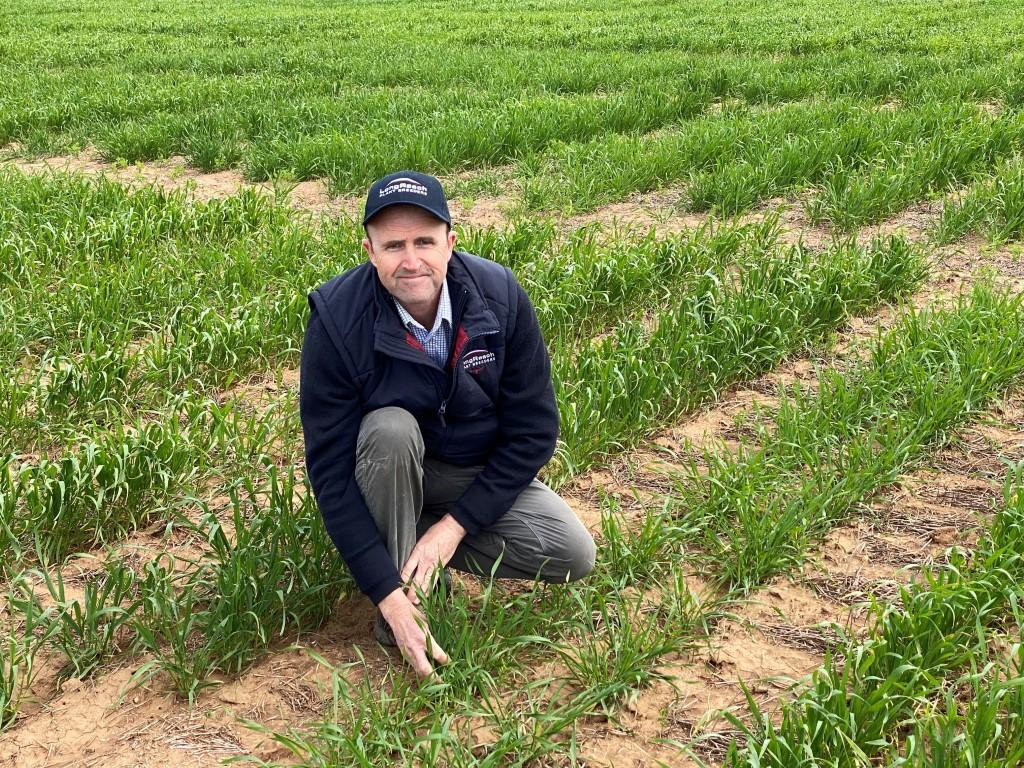 Colin Edmondson; LongReach Plant Breeders technical development manager
