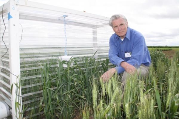 Sowing Date & Flowering with Dr Glenn McDonald (next to a heat chamber demonstrating the effect of heat stress on wheat)