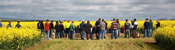 Canola Varieties with Trent Potter