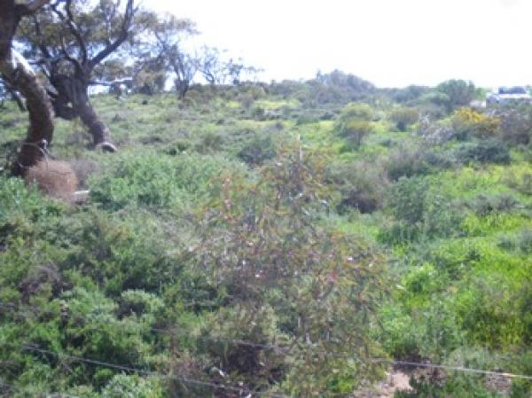 Hart Re-Vegetation Area